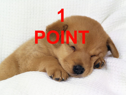HNDpointchien.png