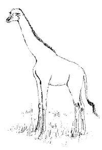 Girafe Désencyclopédie