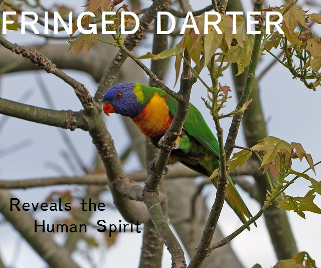 Fringed darter debut album.jpg