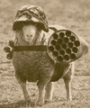CommandoSheep.jpg