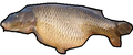 Derfish-icon.png