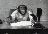 Chimp news.jpg