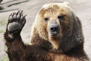 Hands up bear.jpg