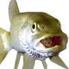 Fishicon.png