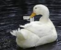 Duckwithgun.jpg