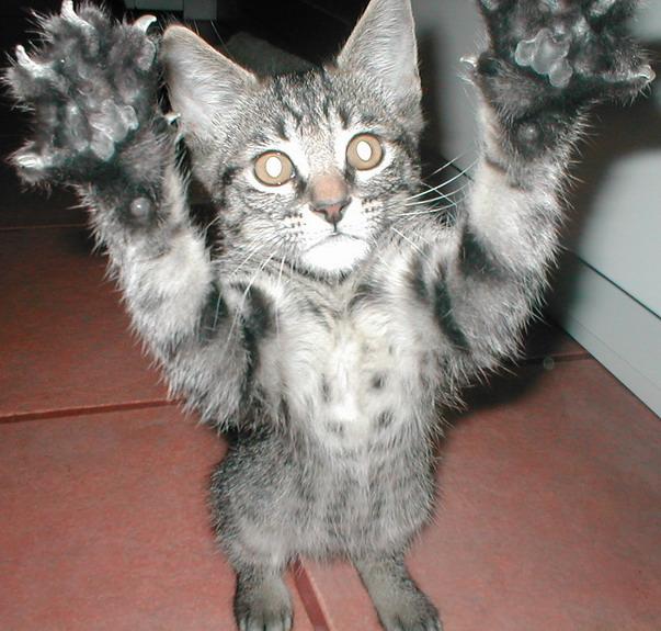 Schrodingers Katze