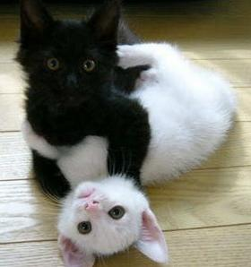 Cats-white-black.jpg