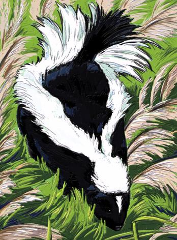Skunk Uncyclopedia The Content Free Encyclopedia