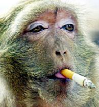 Smoking monkey.jpg