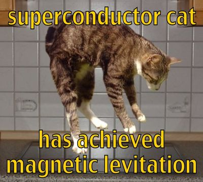 Superconductor cat.jpg