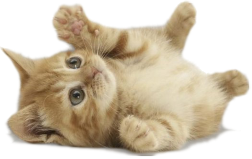 Very-cute-kitten.png