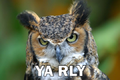 Owl yarly.png