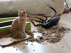Can Roach Bait Kill Dogs
