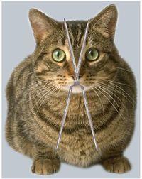 Cats Jaw Making Crunching Noise