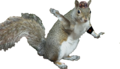 GreySquirrel nazi2.png