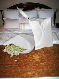 Results for feather pillows