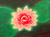 Flower painting.PNG