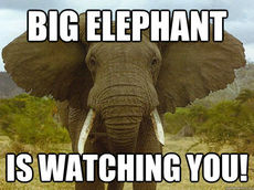 Big elephant is watching you!.jpg